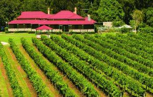 Oreillys Farmstead Vineyard restaurant